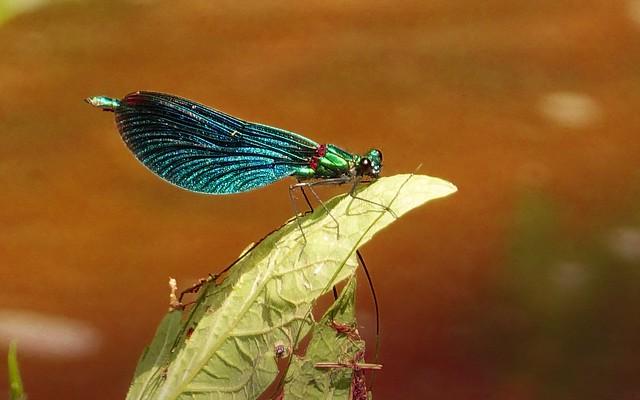 Qu'est-ce que c'est? Une libellule, m'a dit Lili.