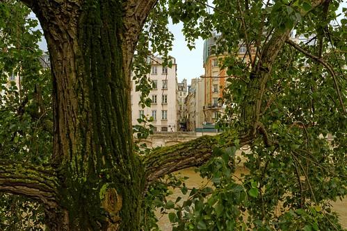 paris france arbre ruegîtlecoeur quaidesorfèvres feuillage nikon d7100 24mmf18ged tronc branches nature ville pantchoa pantxoa