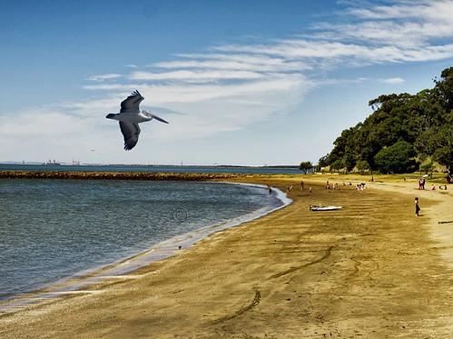 winter sea seascape beach landscape bay seaside pelican brisbane beachscape moretonbay shorncliffe