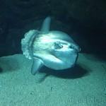 Oceanografic Miguel, acuario 10
