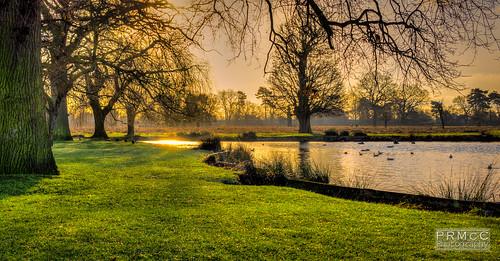 uk trees winter england london sunrise landscape unitedkingdom jerusalem parry hamptoncourt hdr lightroom bushypark hamptonwick photomatix nex7