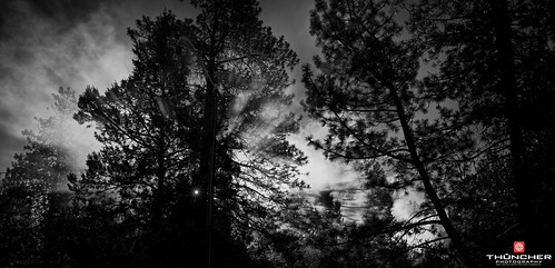 trees bw nature monochrome oregon centraloregon sunrise outdoors northwest bend smoke sony scenic silhouettes fullframe fx nationalgeographic a7r zeiss35mmf28lens sonya7r