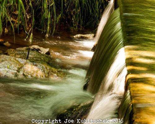 plants lake nature water june outdoors nikon mo missouri springfield d300 kuby 2016 kubitschek