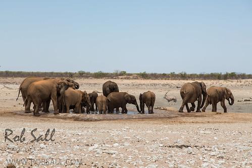 africa vacation elephant canon mammal canon5d elephants namibia canoneos africanelephant 24105 2015 loxodontaafricana kunene 24105f4isusm canon24105mm canon24105f4isusm canon5dmarkiii 5dmarkiii 5dm3 5dmark3 5dmiii canon5dm3 canoneos5dm3 robsallphotography