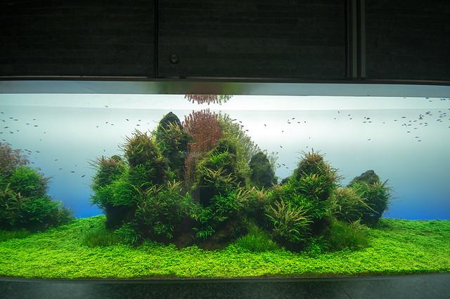 Toyko Skytree and Sumida Aquarium