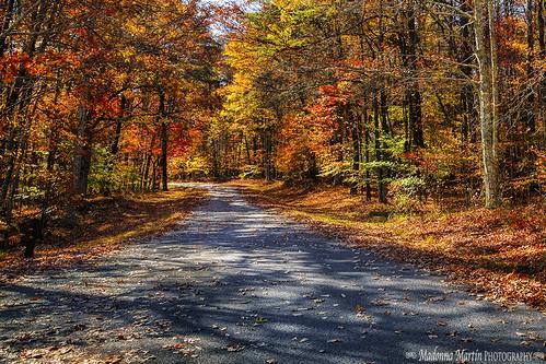 autumn trees scenic northcarolina rockpaper