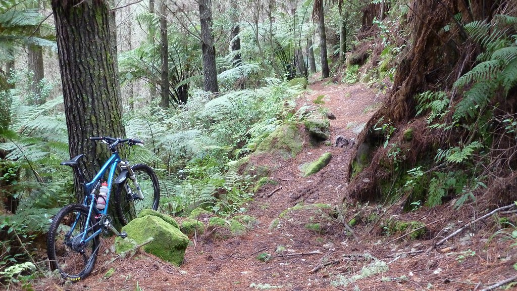 family bike trails rotorua
