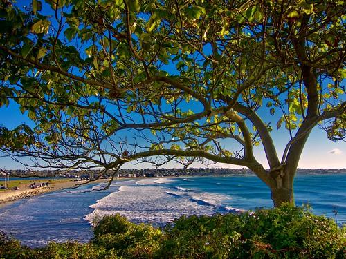 ocean tree surf large cliffwalk 1013 newportri clichésaturday
