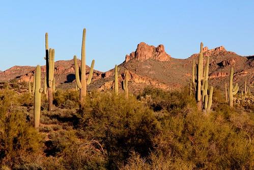 sunset arizona cactus southwest color desert saguaro desertsunset superstitionmountains arizonasunset blinkagain