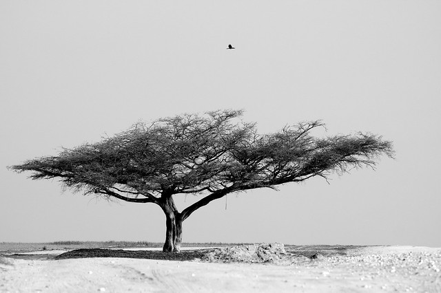the lonely tree (+4000 views, thanks !)