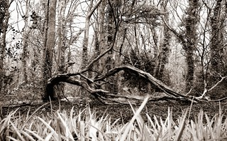 Tired Tree   by Mr B's Photography