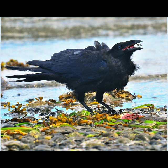 nevermore XII . . .