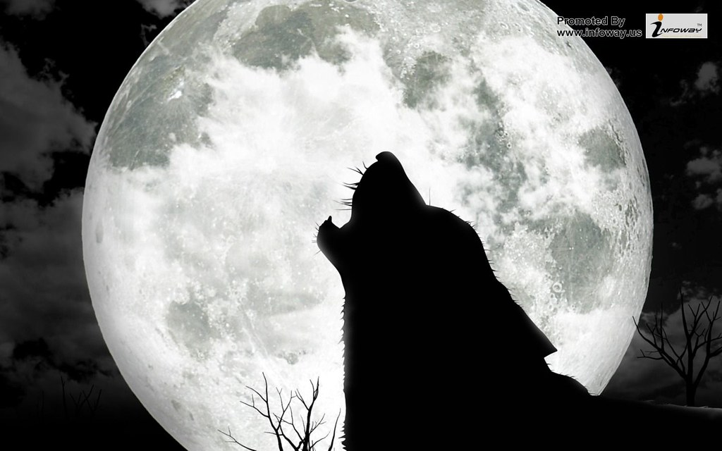 Hd Wallpapers Cool Wolf Wallpaper Moon Animals Hd Wallpape