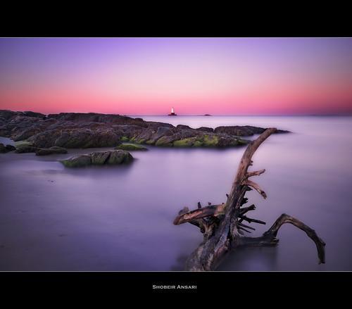 ocean longexposure ri lighthouse seascape tree rock sunrise branch rhodeisland littlecompton sakonnetpoint nd110 shobeiransari sakonnetlighthouse sakonnetlight sakonnetlightstation
