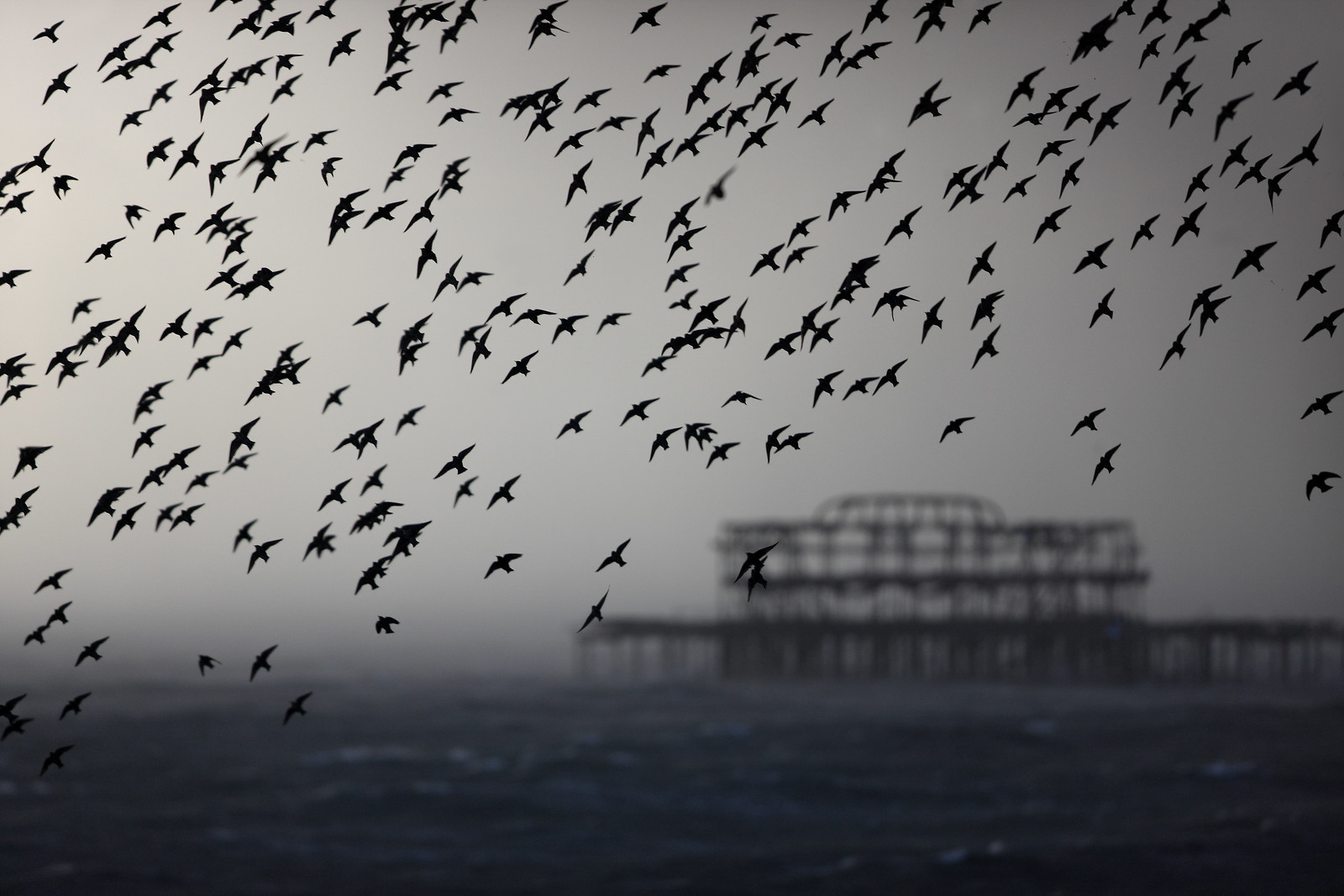Starling Murmuration and West Pier, in a Hail Storm