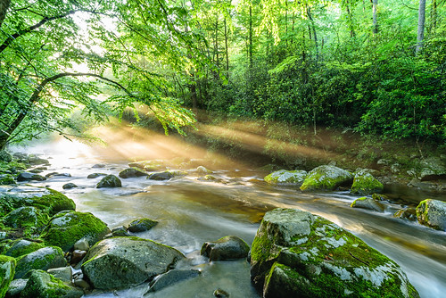 park longexposure light sunset sun tree green nature water leaves rock zeiss forest river flow us nationalpark bath unitedstates tennessee holy national gatlinburg greatsmokymountains littleriver holylight milvus synchronousfireflies milvus2821 milvus2821zf2