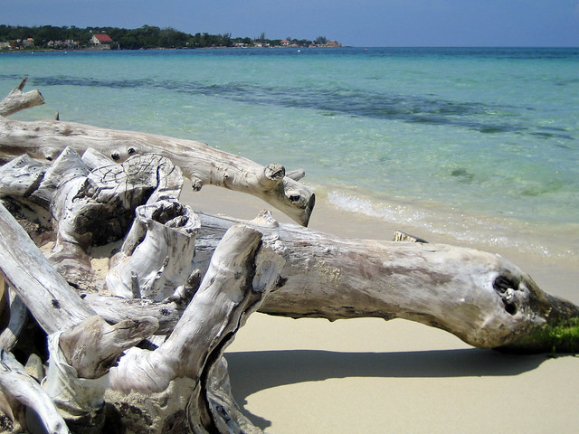 Old wood on the beach - Negril, Jamaica