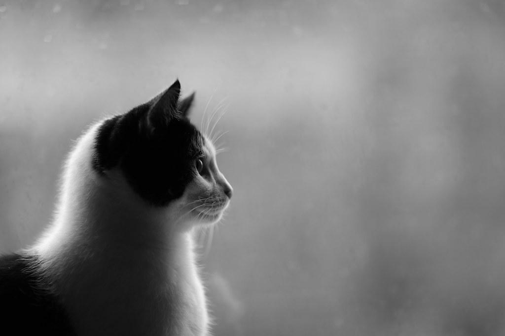 8 - Jan - 2014 - Black and White