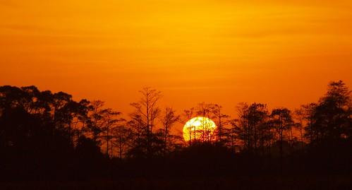 sun florida risesunrise treesmartincounty