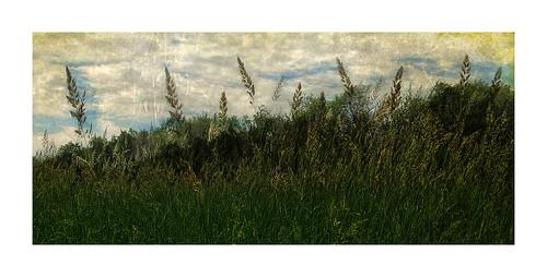 grass landscape brandon manitoba assiniboineriver