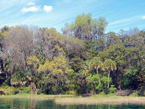 park trees water river landscape spring scenery florida dunnellon