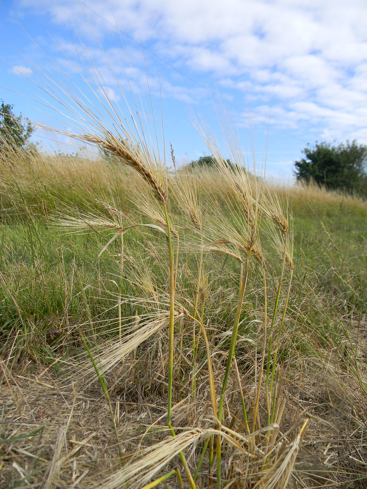 Barley Southbourne to Chichester