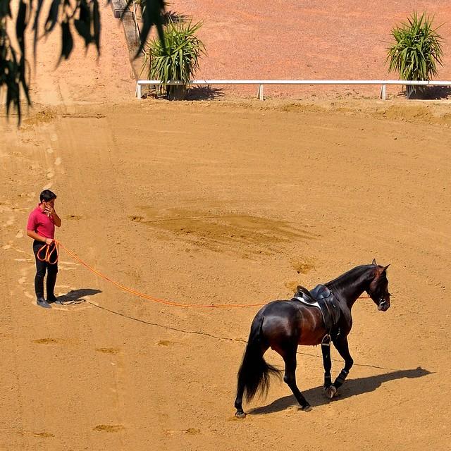 Córdoba : Training of the horse