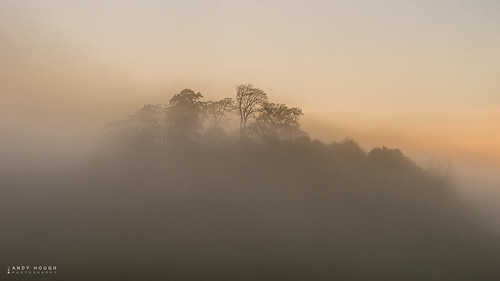 trees mist weather fog golden sony south minimalism oxfordshire wittenhamclumps a99 sonyalpha andyhough slta99v andyhoughphotography tamronsp70200di