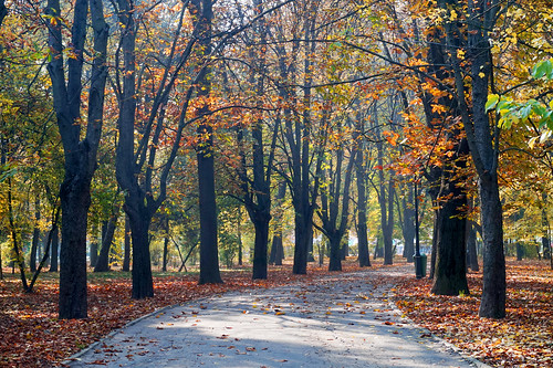 park autumn fall landscape alley seasons path romania toamna bucuresti herastrau sector1