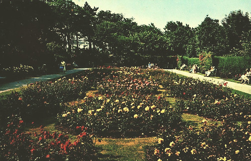 Rose Garden | by storiesfromscarborough