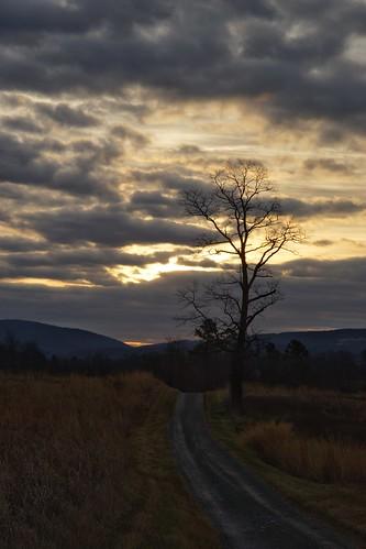 blandy statearboretumofvirginia sunrise tree landscape