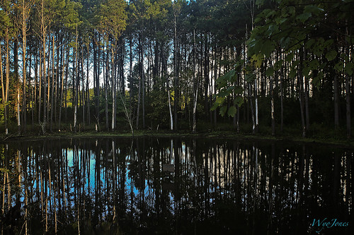 trees reflection sign pond woods calhoun tennessee shallow np pinetrees beech mcminncounty wyojones