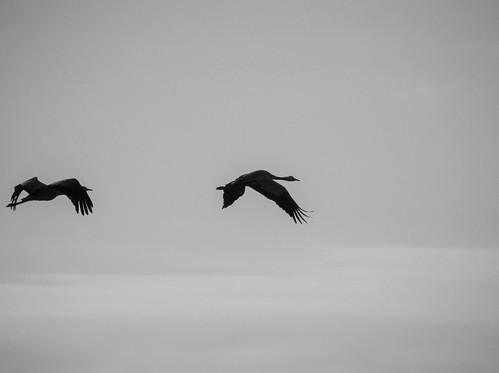 Crane couple | by neekoh.fi