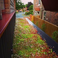 Roof in bloom #home4self
