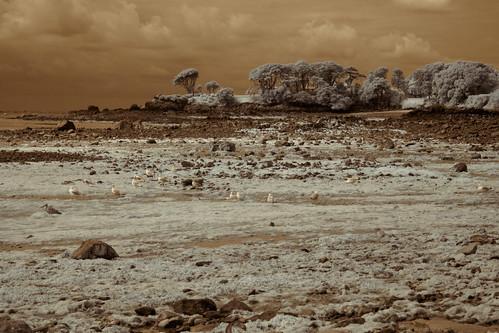 trees sky seagulls seascape birds clouds landscape rocks europa europe himmel wolken jersey infrared lowtide landschaft channelislands je stclement infrarot olympusepl5