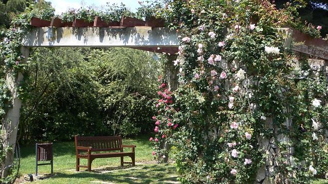 The Barcelona Rose Garden, Cervantes Park.