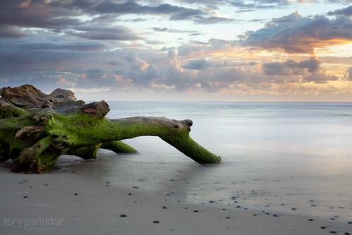 seascape beach sunrise driftwood nsw ballina