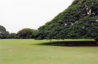 Big Tree   by masa_0202