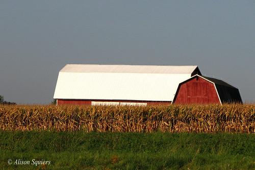 fall barn corn farm harvest elements