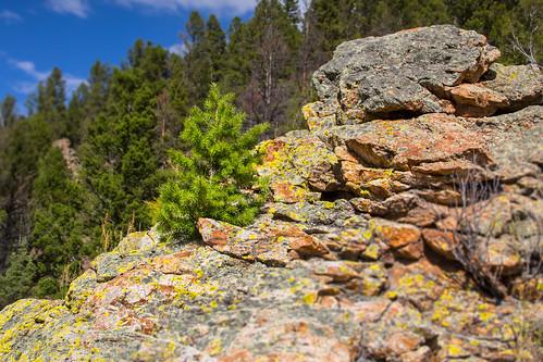trees summer rock canon montana rocks basin evergreen evergreentrees 60d