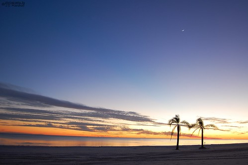sunset moon tree beach water mississippi sand palm sound biloxi
