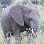 Safariing at Pilanesburg National Park