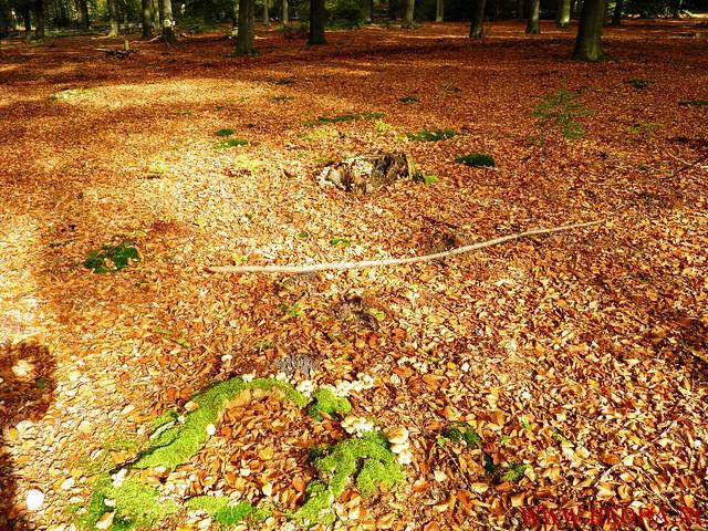 20-10-2012     Wedeblick-   Driebergen        25 Km (133)