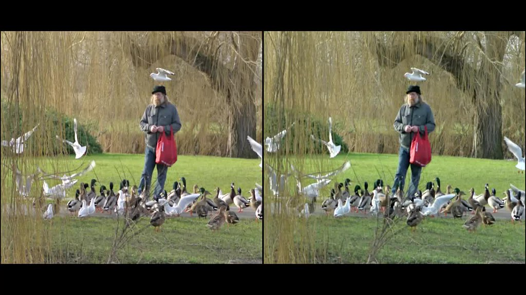 feeding the ducks - 3d cross-view