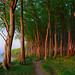 the beauty of coastal forests ... by Sandra Bartocha