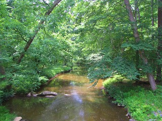 William B. Umstead State Park Sycamore Creek