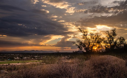 sunset arizona cactus landscape desert