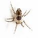 Arañas Enanas Redondas - Photo (c) Ken-ichi Ueda, algunos derechos reservados (CC BY-NC)