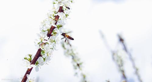 flower nature sony snapshot