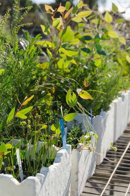 COP - buffers to bushland species 2013 - 4233